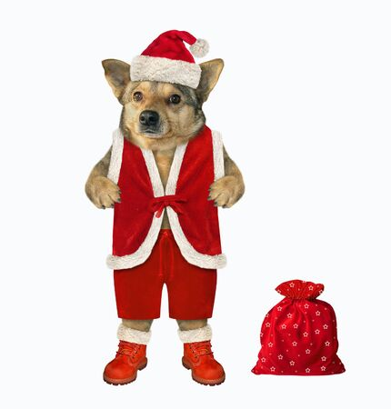 The dog in a Santa outfit is standing near the a red sack of Christmas gifts. White background. Isolated.