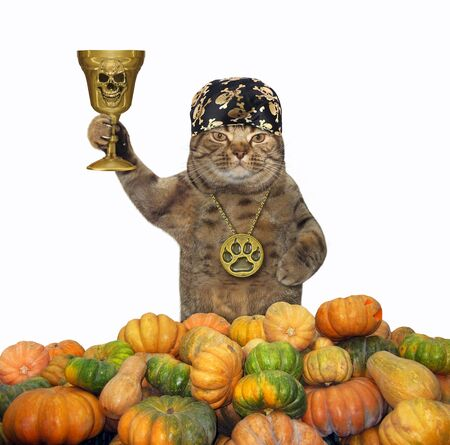 The cat in a locket and a bandana holds the golden cup in a pile of pumpkins. White background. Isolated.