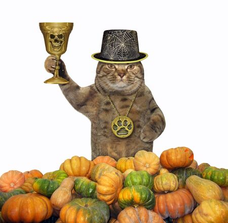 The cat in a locket and a hat holds the golden cup in a pile of pumpkins. White background. Isolated.