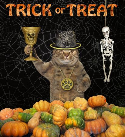 The cat in a locket and a hat holds the golden cup in a pile of pumpkins. Trick or treat. Black background.