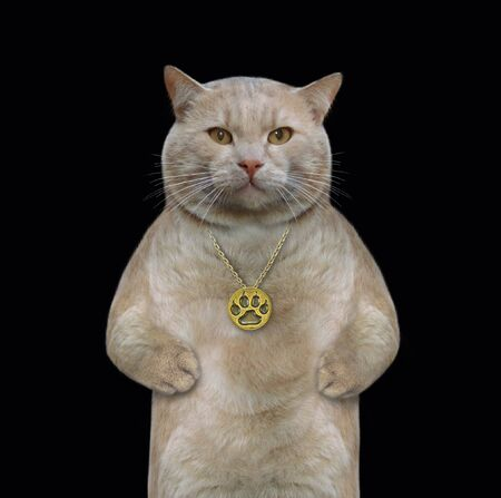 The beige cat wears a gold locket on a chain. Black background. Isolated.