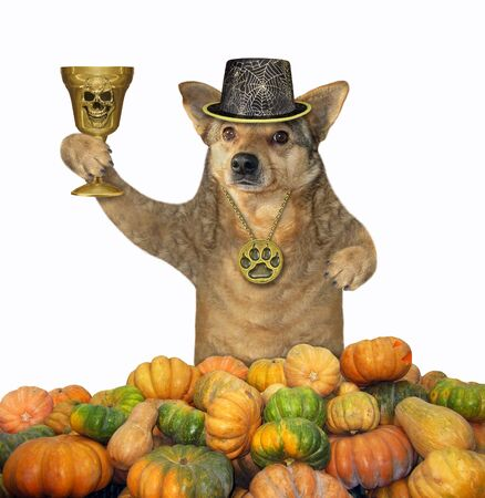 The dog in a locket and a hat holds the golden cup in a pile of pumpkins. White background. Isolated. Reklamní fotografie