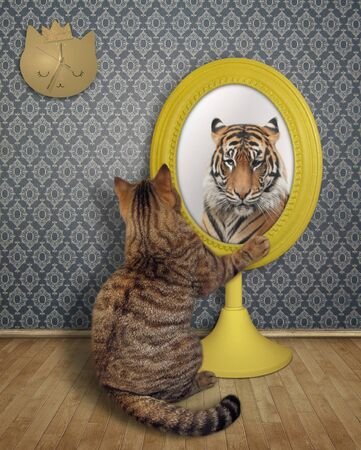 The cat stares his reflection in the mirror in the living room at home.