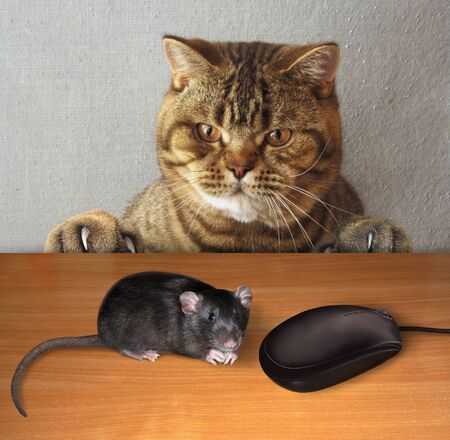 The beige puzzled cat is sitting at the table. A black rat and a computer mouse are in front of him.