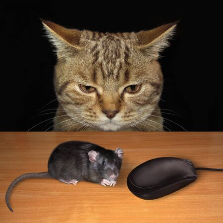 The beige bewildered cat is sitting at the table. A black rat and a computer mouse are in front of him.