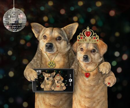 Two dogs have fun in a nightclub. They made selfie near a mirror disco ball.