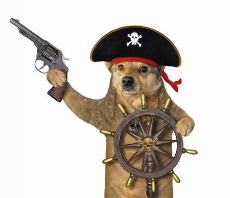 The beige dog in a pirate uniform with a pistol is at the helm of the ship. White background. Isolated.