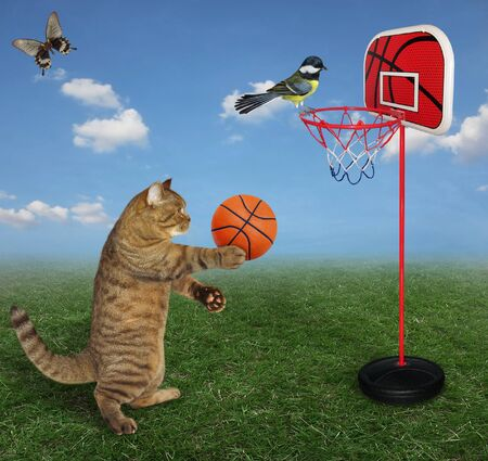 The beige cat athlete is playing basketball on grass in the meadow. A butterfly flies next to him. A bird is on a basketball hoop.