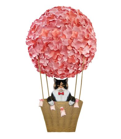 The multicolored cat in a red bow tie is riding a hot air balloon decorated with pink flowers. White background. Isolated.