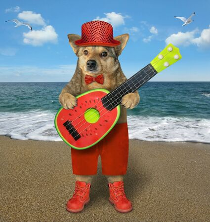 The beige dog in red stylish clothing is playing a watermelon acoustic guitar and singing a song on the beach of the sea.