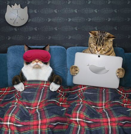 Two cats are resting in bed under a plaid blanket in the bed room at home. One of them in a red sleep mask is sleeping and the other is holding a laptop.