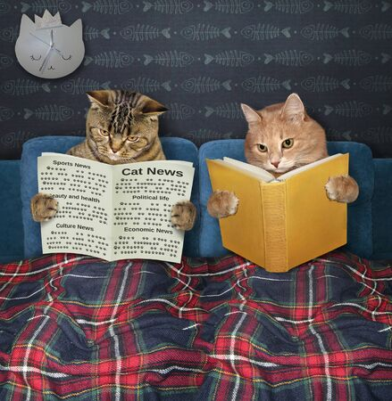 Two cats are resting in bed under a plaid blanket in the bed room at home. One of them is reading a newspaper and the other is holding a book. 版權商用圖片