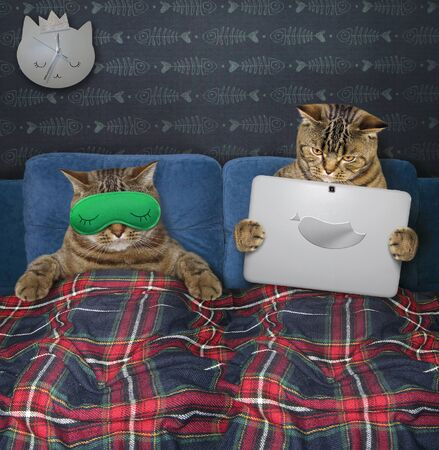 Two cats are resting in bed under a plaid blanket in the bed room at home. One of them in a green sleep mask is sleeping and the other is holding a laptop.