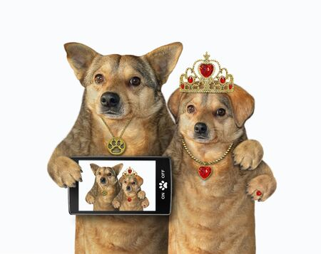 Two beige dogs in love are taking selfie. White background. Isolated.