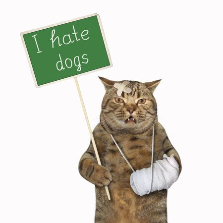 The beige cat with a broken leg is holding a green protest sign that says I hate dogs. White background. Isolated.