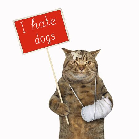 The beige cat with a broken leg is holding a red protest sign that says I hate dogs. White background. Isolated.