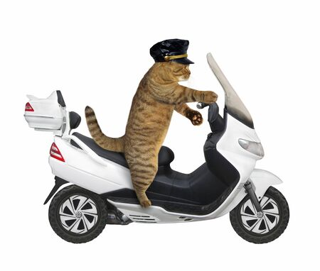 The beige cat in a black cap is riding a white motorbike. White background. Isolated.