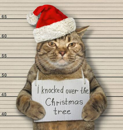 The beige cat in a Santa Claus hat was arrested. It has a sign around its neck that says I knocked over the Christmas tree. Lineup background. 版權商用圖片