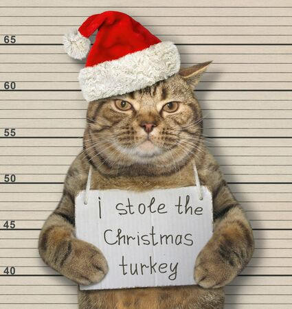 The beige cat in a Santa Claus hat was arrested. It has a sign around its neck that says I stole the Christmas turkey. Lineup background. 版權商用圖片