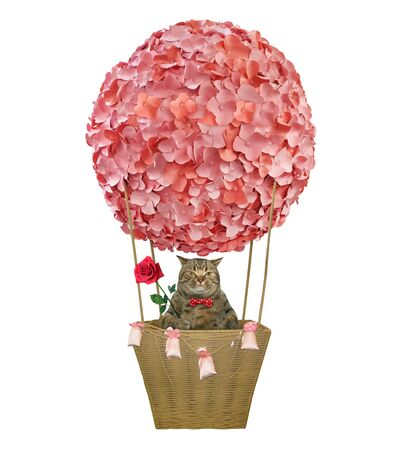 The beige cat in a bow tie with a red rose is riding a hot air balloon decorated with pink flowers. White background. Isolated.