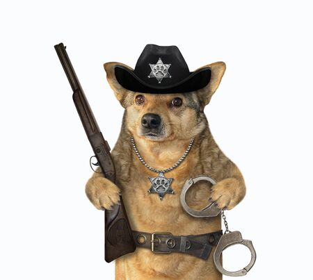 The beige dog policeman is wearing in a black cowboy hat, a police badge around his neck and a stainless steel belt. He holds a rifle and handcuffs. White background. Isolated.