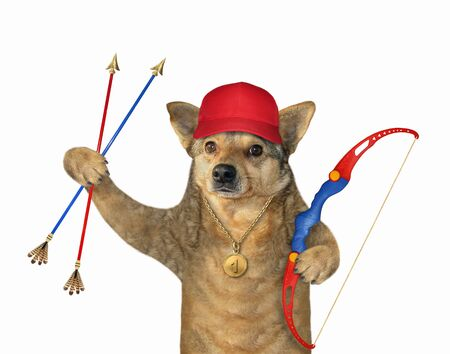 The beige dog archer in a red cap with a gold medal is holding a bow and arrows. White background. Isolated.