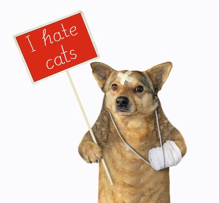 The beige dog with a broken leg is holding a red protest sign that says I hate cats. White background. Isolated.