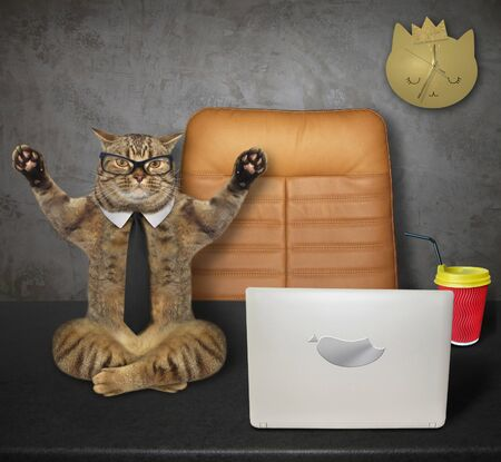 The beige cat office worker weared in a black tie and glasses is doing yoga exercise on his desk near a computer. White background. Isolated.