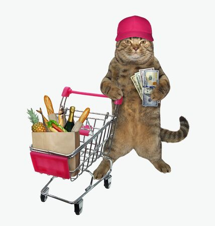 The beige cat with dollars in his paw is pushing the metal grocery shopping cart full of various groceries. White background. Isolated.