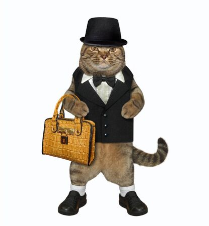 The beige fashionably dressed cat is holding a brown leather briefcase. He looks like a gentleman. White background. Isolated.