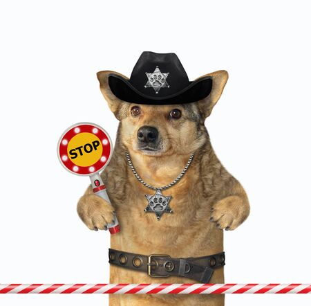 The beige dog policeman is wearing in a black cowboy hat, a police badge around his neck and a stainless steel belt. He holds a stop sign. White background. Isolated.