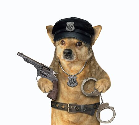 The beige dog policeman is wearing in a black hat, a police badge around his neck and a stainless steel belt. He holds a revolver and handcuffs. White background. Isolated.