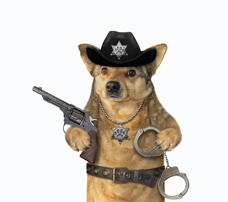 The beige dog policeman is wearing in a black cowboy hat, a police badge around his neck and a stainless steel belt. He holds a revolver and handcuffs. White background. Isolated.