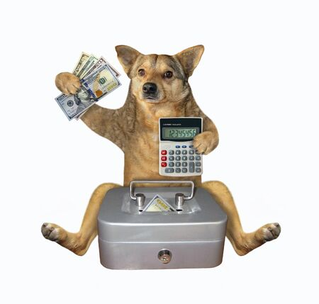 The beige dog banker with an accounting calculator is putting dollars in a metal safe. White background. Isolated.