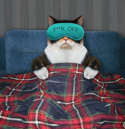 The multicolored cat in a blue sleep mask is lying under a plaid on the bed at home. 版權商用圖片