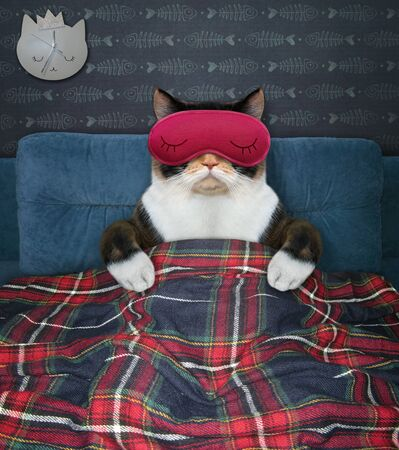 The multicolored cat in a red sleep mask is lying under a plaid on the bed at home.
