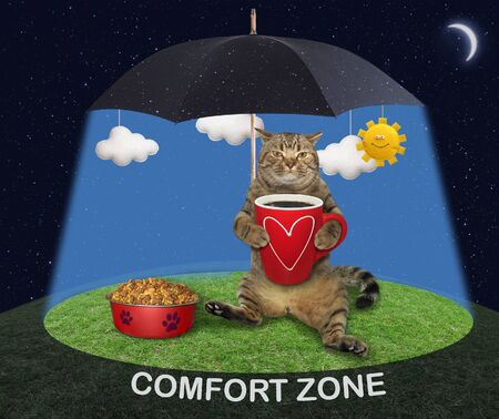 The beige cat is sitting near a bowl with dry food and drinking coffee under a black umbrella in the sunshine on a green meadow at night. Comfort zone. 版權商用圖片