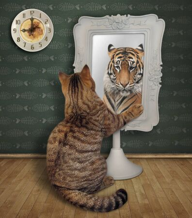 The beige cat stares his funny reflection in the square mirror at home. This is a tiger.