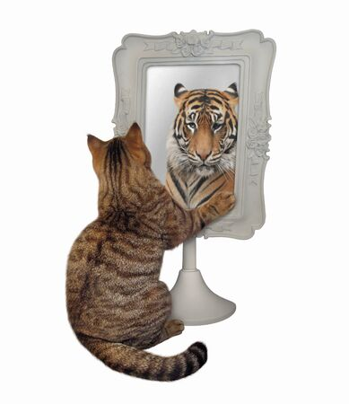 The beige cat stares his funny reflection in the square mirror. This is a tiger. White background. Isolated.