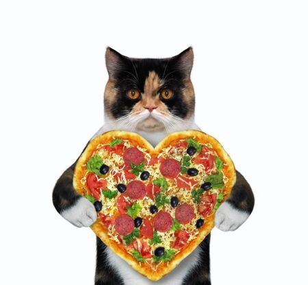 The multicolored cat is holding a heart shaped pizza. White background. Isolated.