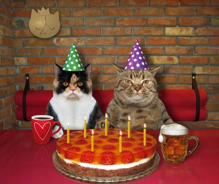 The couple of cats in love celebrate a birthday in the restaurant. They eat a holiday cake with seven burning candles and drink beer and coffee. 版權商用圖片