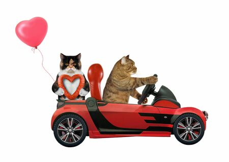 The two cats in love are in a red cabriolet. One of them holds a red balloon and a heart shaped sausage the other drives the car. White background. Isolated. 版權商用圖片