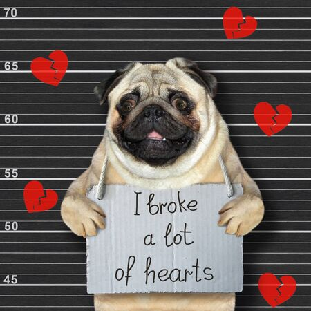 The dog mops was arrested. He has a sign around his neck that says I broke a lot of hearts. Lineup black background. 版權商用圖片
