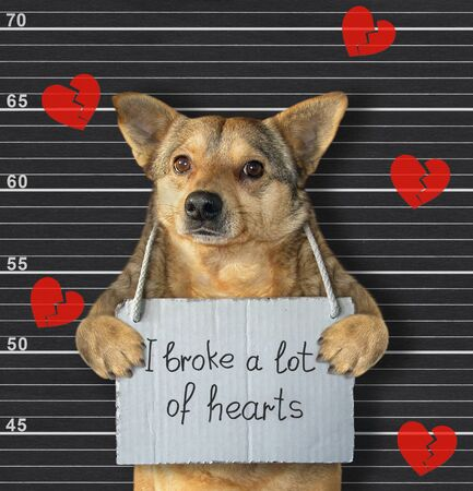 The beige dog was arrested. He has a sign around his neck that says I broke a lot of hearts. Lineup black background.
