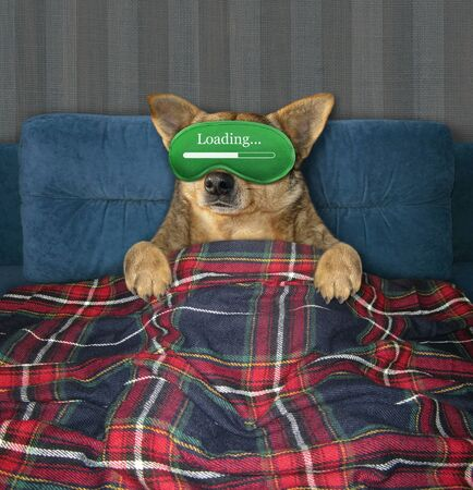 The beige dog in a green sleep mask is sleeping under a plaid on the bed in his bedroom. 版權商用圖片
