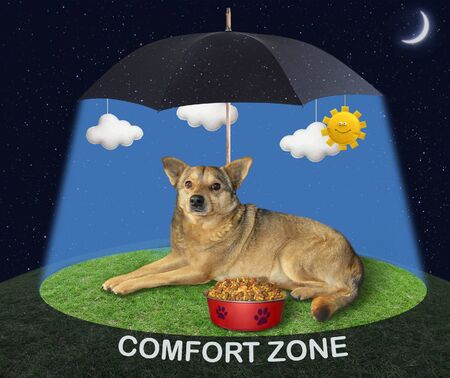 The beige dog is lying near a bowl with dry food under a black umbrella in the sunshine on a green meadow at night. Comfort zone.