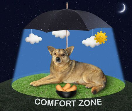 The beige dog is lying near a bowl with sausage under a black umbrella in the sunshine on a green meadow at night. Comfort zone.
