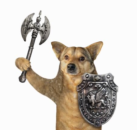 The beige dog viking is armed with a shield with a dragon and a double headed battle axe. White background. Isolated. 版權商用圖片