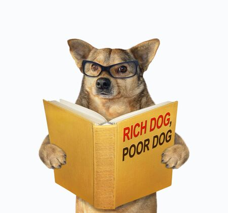 The beige dog in glasses is reading a book called rich dog, poor dog. White background. Isolated.