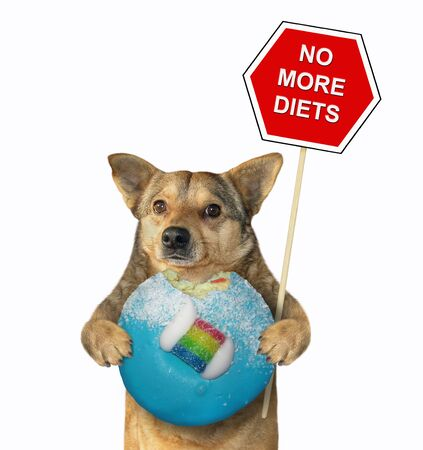 The beige dog is holding a blue bitten donut and a red sign. No more diets. White background. Isolated.